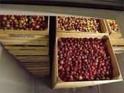 Камера хранения фруктов