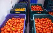Камера хранения томатов (помидоров)